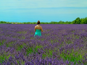 South of France Photos - Lavender Fields